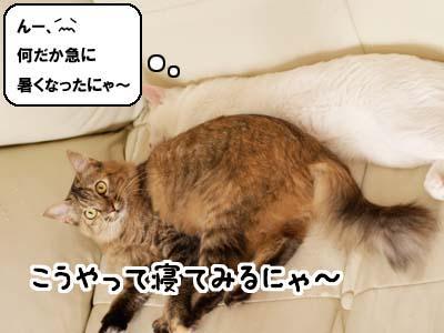 cat2134