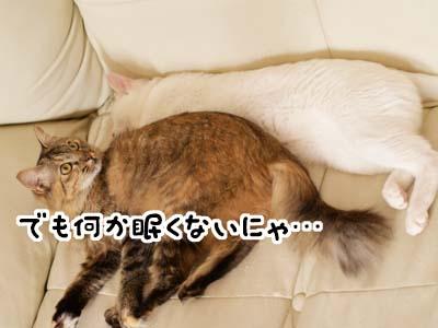 cat2135