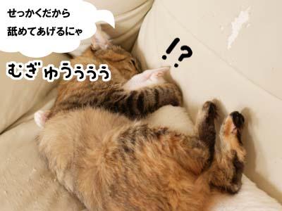 cat2136