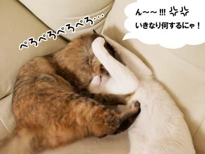 cat2137