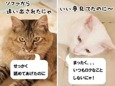 cat2138