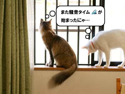 cat2139