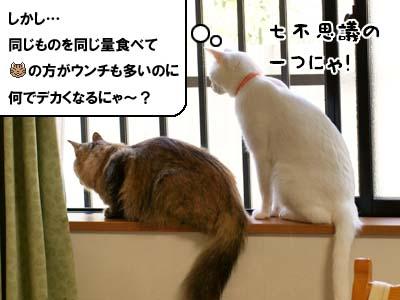 cat2141