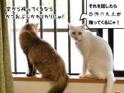 cat2142