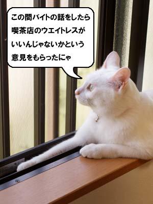 cat2144