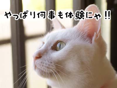 cat2145