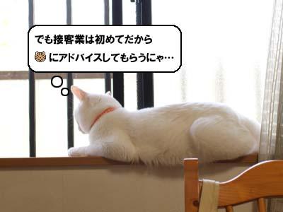 cat2146