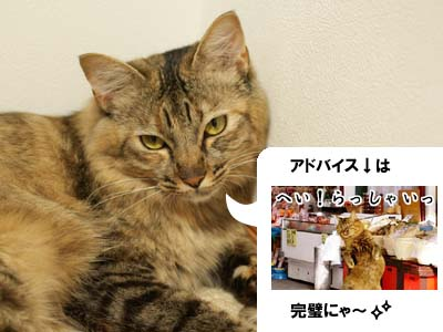 cat2148