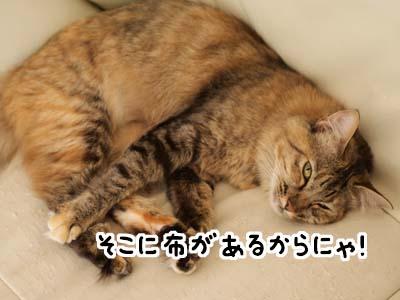 cat2154