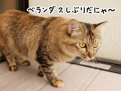 cat2155