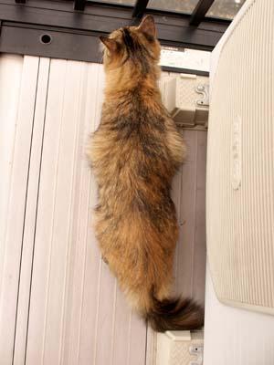 cat2156