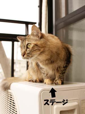 cat2157