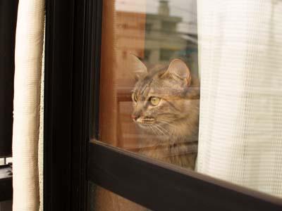 cat2158