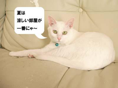 cat2159