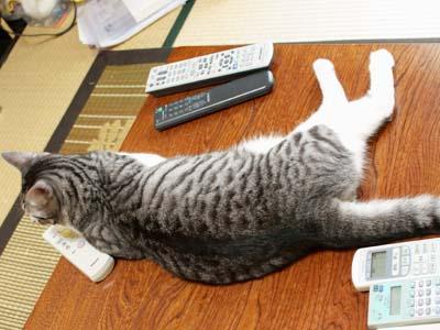 cat2161