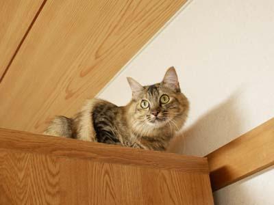 cat2162