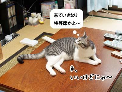 cat2163