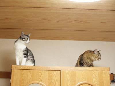 cat2164