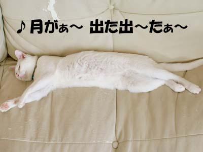 cat2167