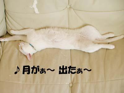 cat2168