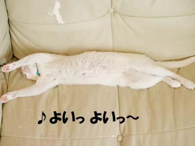 cat2169