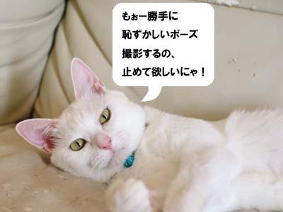 cat2170