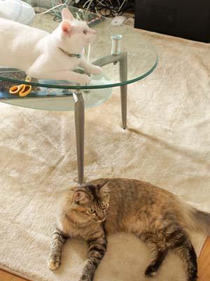 cat2172
