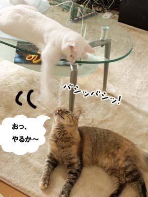 cat2174