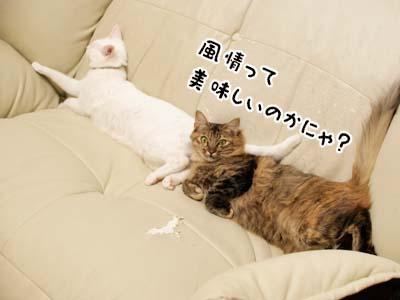 cat2183