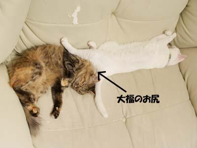 cat2185