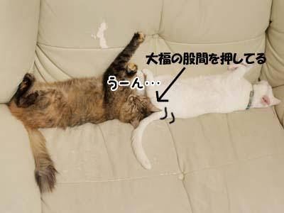 cat2186
