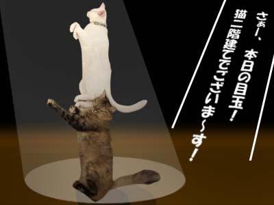 cat2187
