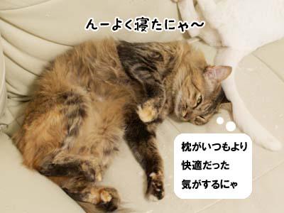 cat2188