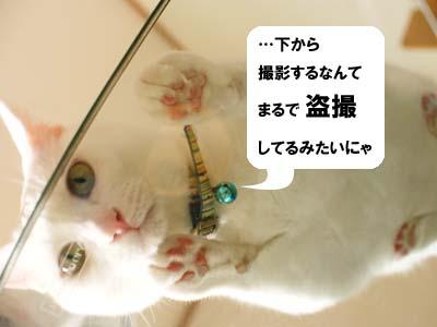 cat2191
