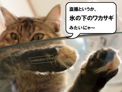 cat2192