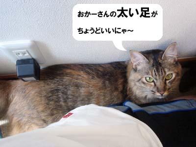 cat2195