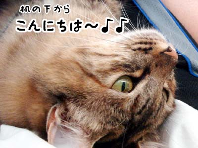 cat2197
