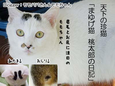 まゆげ猫桃太郎の日記