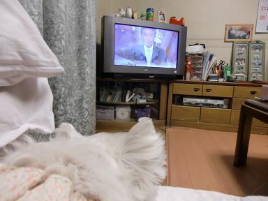 テレビみてます