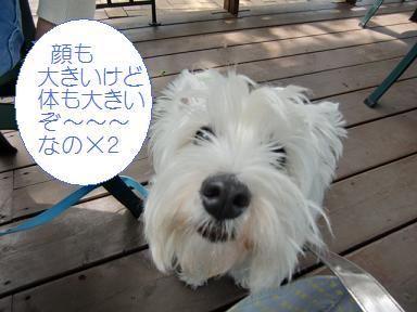 002_20110509004357.jpg