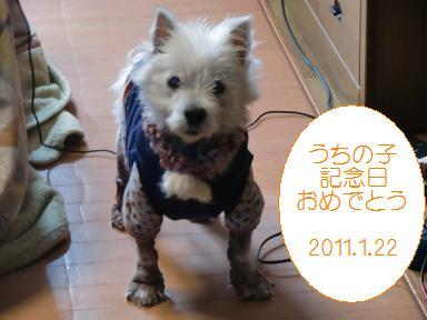 011_20110123223953.jpg
