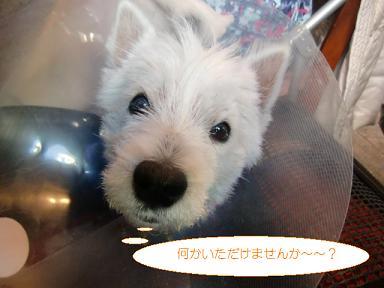 013_20110203200052.jpg