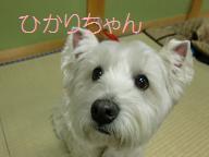 022_20110213212407.jpg