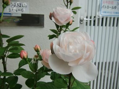 037_20110609004300.jpg
