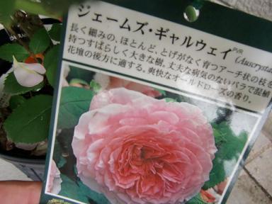 039_20110609004612.jpg