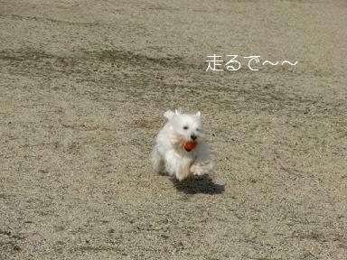 041_20120325161907.jpg