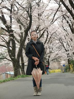 真原桜並木①