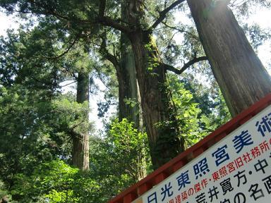 東照宮の杉