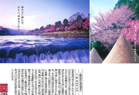 そうだ京都いこう 上賀茂神社