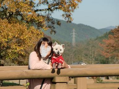 一乗谷朝倉遺跡2011.11.17